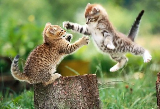 Kitty's fighting